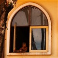monk-window
