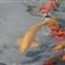 20061209 Bermuda - 002