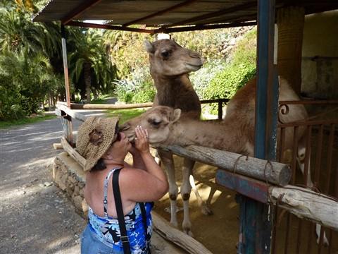 Camel ride-19 (1024x768)