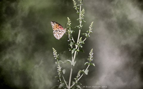 Butterfly in the mist