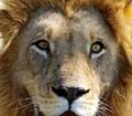 Moremi Game Reserve - Botswana