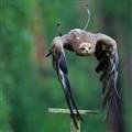 Eagle Takeoff