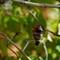 DSC08378 annas guarding nest small