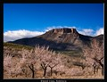 Almond trees, Andalucia