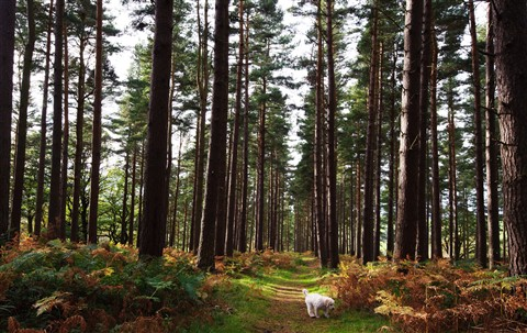 Ben in Slaley Forest
