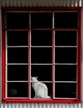 Cat at Window