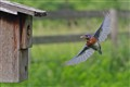 Catch-In Focus Bluebird
