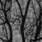 Abrons Tree Shadows