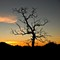 Sunrise_MidHills_MojaveNP_1_011508_1_1_900px_reduced