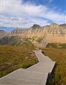 Down The Logan Pass Boardwalk