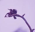 taking off froam a dead tree branch,Salt lake park,Kolkata,India.