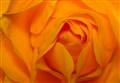 oranjeroosapril2011b