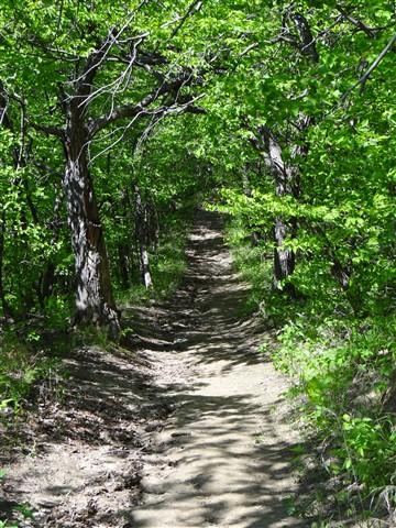 trail at wabonsie
