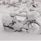 Snow Bike_1