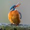Eisvogel Nov 2014 7D MkII  (69 von 104)
