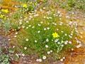 The Desert in Bloom
