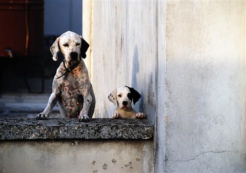 Cani sul tetto