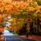 Autumn Cycling 3 v1 copy