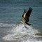 Osprey Surf Fishing