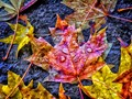 Colorful Wet Leaves