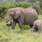 Elephant-baby-whitebalance