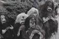 The supernatural-the holy ghost devils,legend