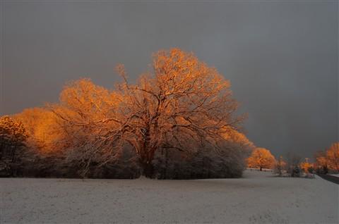 Snowy Delight