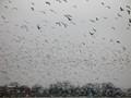Seagulls of Zagreb