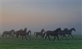 Misty morning land run horses