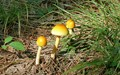 Southern Missouri Mushrooms