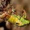 CicadaHatchingDPRChallengeSDIM9341
