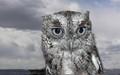Screech Eastern Owl