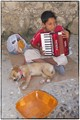 A young musician and his dog