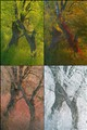 4x2 trees