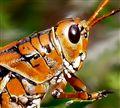 Bug Eye
