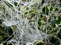 Strange web
