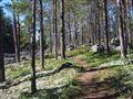 Zen Moment in the Woods