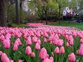 Flowers... color festival