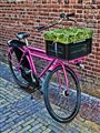 Dutch City Bike
